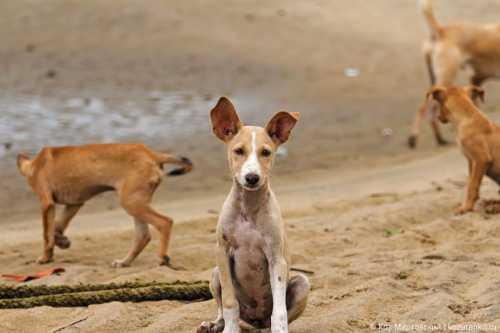 щенок потерялся на трассе и не мог попасть к маме как спасли крошку